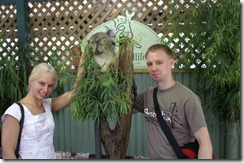 Krista, koala, apina