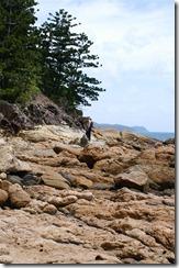 Linssilude rantakalliolla