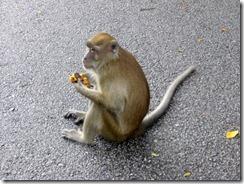 Lintupuiston parkkipaikalla ollut apina