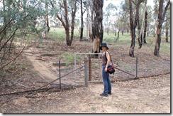 Löysimme portin aidan toiselle puolle, mutta kenguja ei enää löytynyt