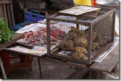 Pudun marketti, kuva 4, sammakot ja karu kohtalo