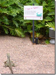 Ystävällinen vesilohikäärme