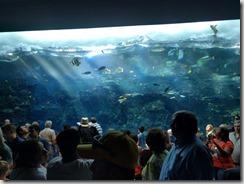 Trooppinen akvaario